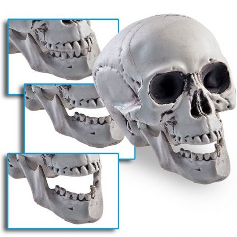 Skull Prop with moving Jaw 15cm PB Pirate Halloween Skeleton Head